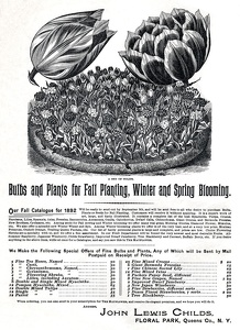Child's Seeds -1892A