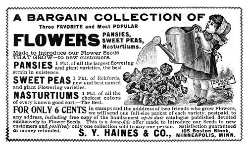 S Y Haines Seeds -1900A